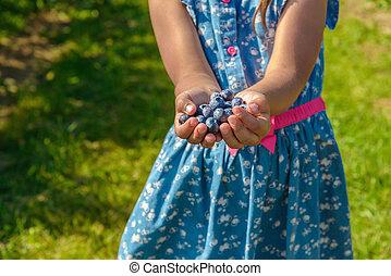 Ripe fresh blueberry in girl hands