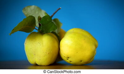 ripe fruit quince isolated on blue background - ripe fruit...