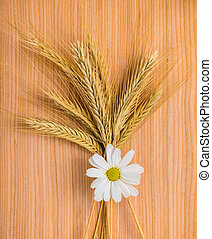 ripe golden ear wheat with chamomile on wooden background