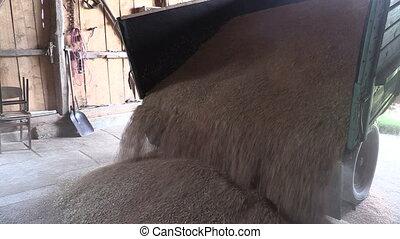 ripe grain unload