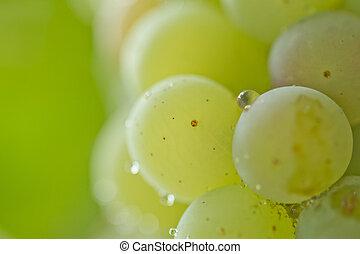 ripe green grapes in nature. macro