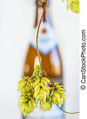 ripe hop cones with beer bottle