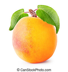Ripe juicy apricot with leaves