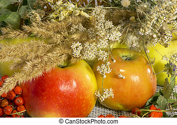 ripe juicy autumn apples with red ashberry