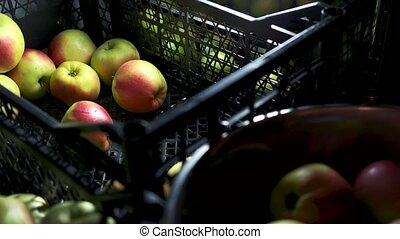 Ripe juicy fruit. - Hand taking fruit from crate. Ripe juicy...