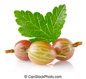 ripe juicy gooseberry with green leaf