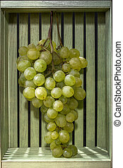 Ripe large bunch of grapes in a wooden green box