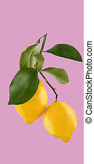 Ripe lemon fruit backround on pink background