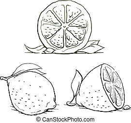 ripe lemon with leaf. vintage set. vector illustration isolated on white background