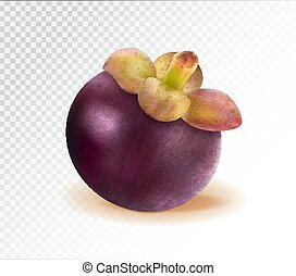 Ripe mangosteen isolated on transparent background. Closeup. Realistic vector, 3d illustration