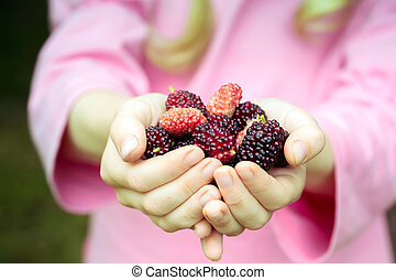mulberry - ripe mulberry in the hands of a girl