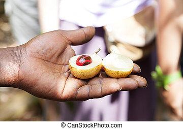Ripe nutmeg. - Ripe nutmeg in farmers hand.