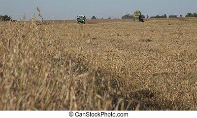 Ripe oats and combine harvesting unloading grain into...
