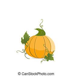 Ripe orange pumpkin
