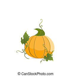 Ripe orange pumpkin