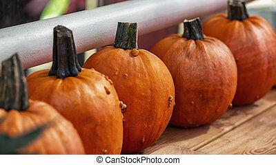 Ripe orange pumpkins in a row. Harvesting vegetables in the autumn season. Preparing gourd for Halloween. Natural fresh farm pumpkin close-up