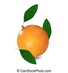 Ripe orange with leaves. Vector illustration.