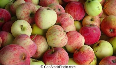 Heap of healthy and delicious, organic apples, dappled in red, yellow and green, after the harvest. FullHD 1080p footage