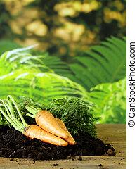 ripe organic carrots