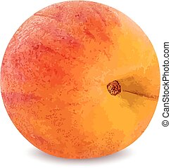 Ripe peach fruit isolated on white background vector illustration