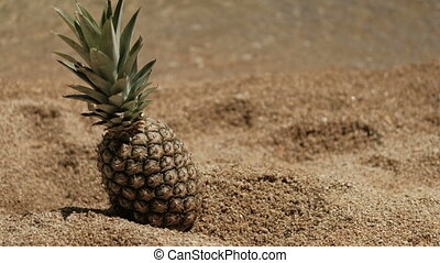 Ripe pineapple on sandy coast in sunny weather. Large exotic...
