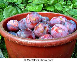 ripe plum in red pail