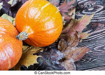 ripe pumpkin in autumn maple leaves