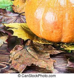 ripe pumpkin in autumn