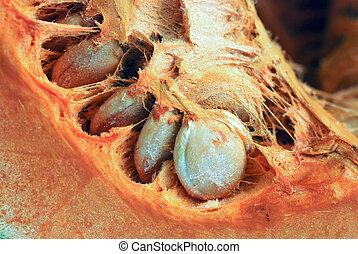 ripe pumpkin seeds
