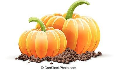 Ripe pumpkin vegetables at soil autumn harvest