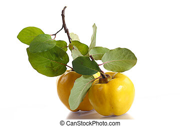 quince - Ripe quince with leaves on a white background