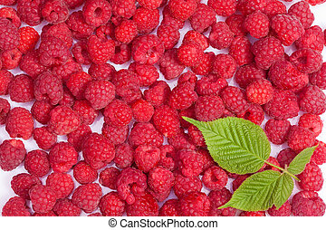 ripe raspberries wallpaper