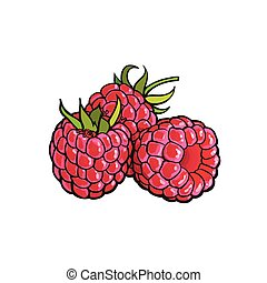 Ripe raspberry isolated on white background