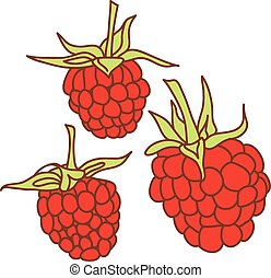ripe raspberry isolated on white background. Sketch, hand-drawn.