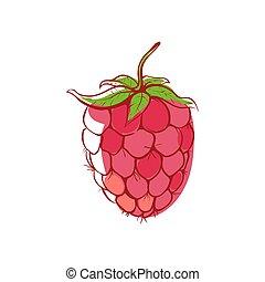 Ripe raspberry isolated vector icon
