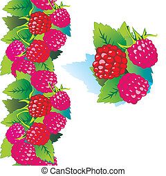 Ripe raspberry. - Ripe raspberry on a white background.