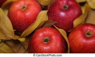 Ripe red apples lie on yellow leaves - Red apples among...