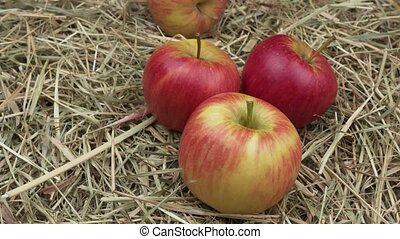 Ripe red apples on the hay.