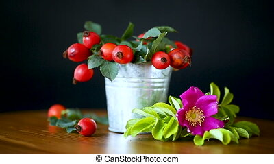 Ripe red briar berries on a branch on a black background