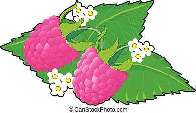 Ripe red cartoon raspberry with green leaves and white flowers isolated on white background.