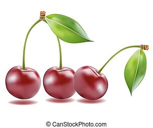 Ripe red cherry berries with leaves. Vector.