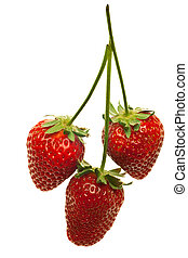 ripe red strawberries with stems and leaves isolated on white background