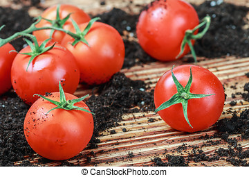 ripe red tomato on the ground