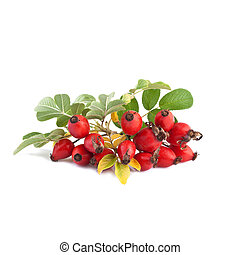 rose hip or Rosa canina