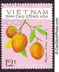 Ripe sapodilla (Manilkara Achras Fruit Tree, Formerly achras sapota. Known in Vietnamese as xa p? ch? or hong xiem