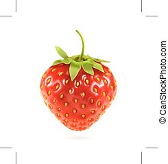 Ripe strawberry, vector illustration, isolated on white background