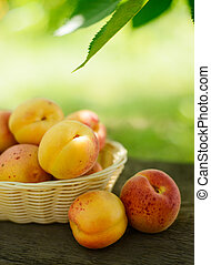 Ripe Tasty Apricots in the Basket on the Old Wooden Table