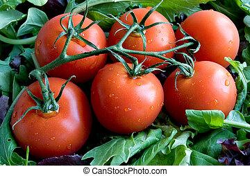 Ripe Tomatoes Closeup