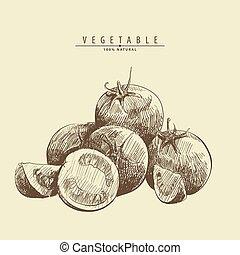 ripe tomatoes illustration