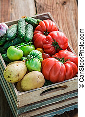 Ripe vegetables in greenhouse